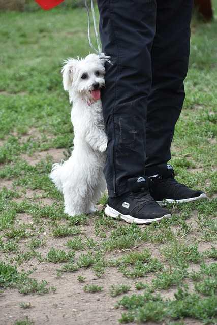 pies-się-boi-burzy-lęk-i-niepokój-u-psa