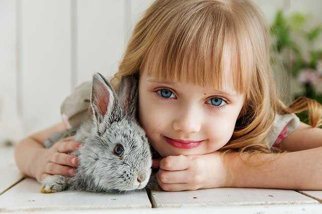 królik-domowy-żywienie-i-utrzymanie