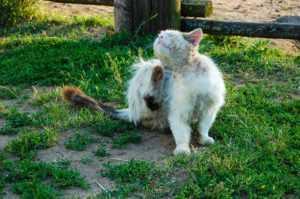zmiany-skórne-u-kotów